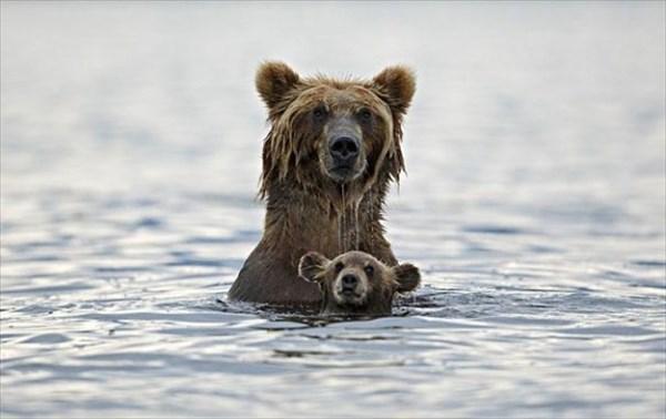 癒やされるような動物の親子画像11