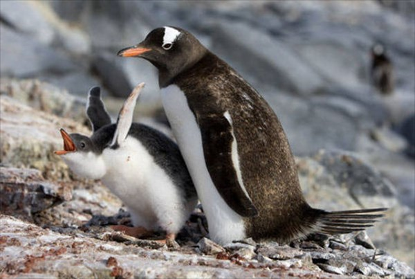 癒やされるような動物の親子画像4