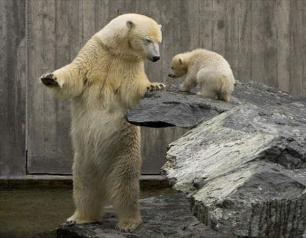 癒やされるような動物の親子画像5