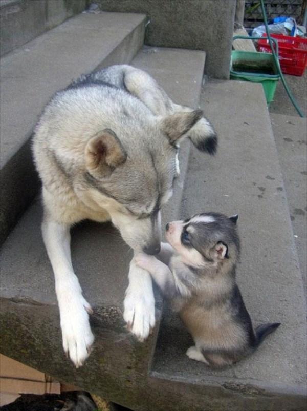 癒やされるような動物の親子画像6