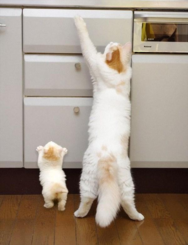 癒やされるような動物の親子画像7