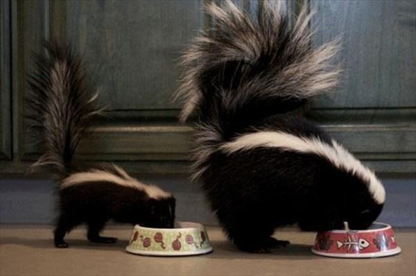 癒やされるような動物の親子画像8