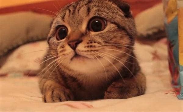 獲物を狙う子猫の表情が可愛すぎる1