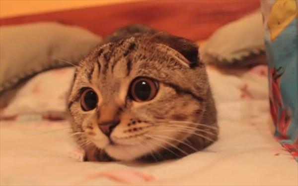 獲物を狙う子猫の表情が可愛すぎる3