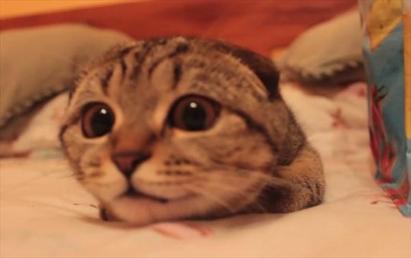 獲物を狙う子猫の表情が可愛すぎる4