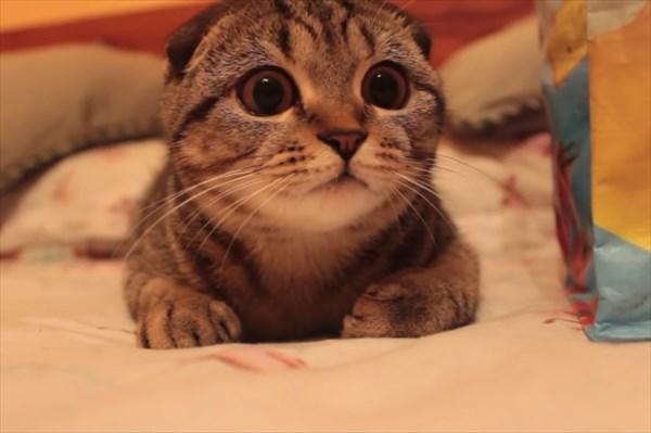 獲物を狙う子猫の表情が可愛すぎる5