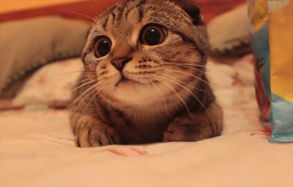 獲物を狙う子猫の表情が可愛すぎる6