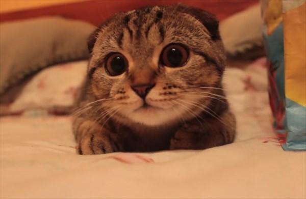 獲物を狙う子猫の表情が可愛すぎる7