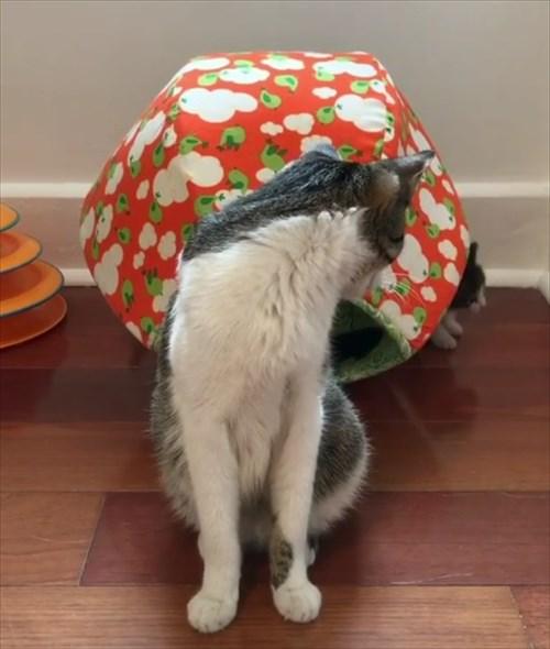 ママ猫を探し見つけたときの反応が可愛い子猫3