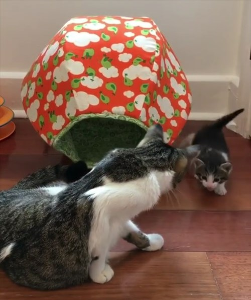 ママ猫を探し見つけたときの反応が可愛い子猫4