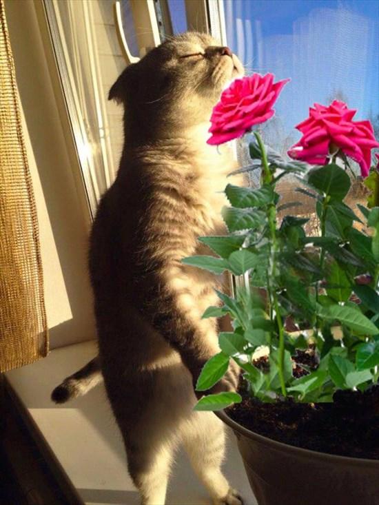 日光を浴びる猫 コラ画像3