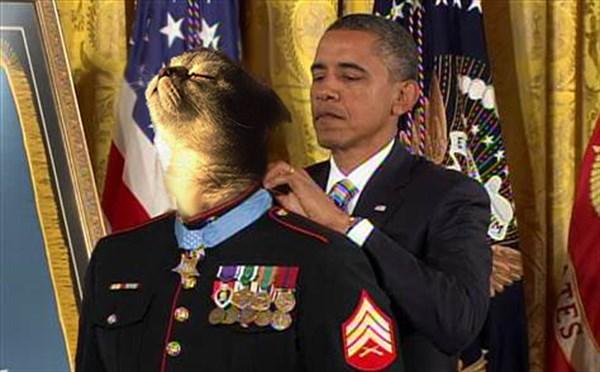 大統領自由勲章を授与 猫のコラ画像