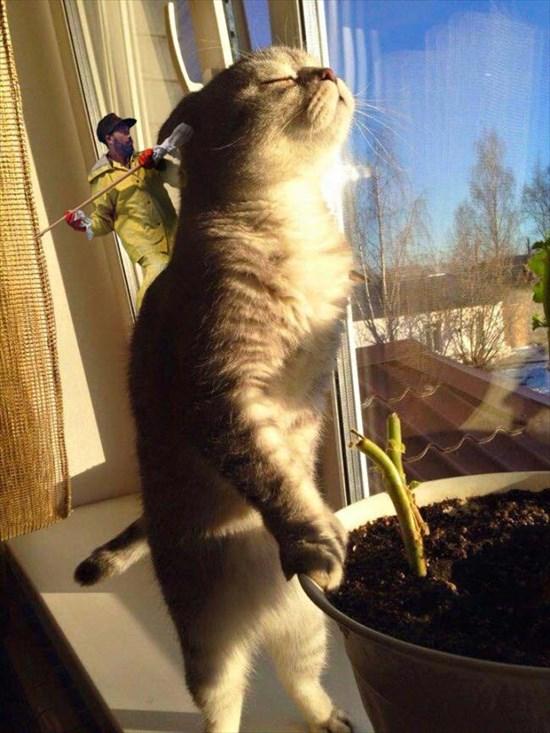 日光を浴びる猫 コラ画像4