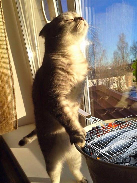日光を浴びる猫 コラ画像2