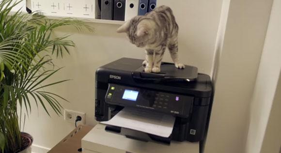 プーピー・キャット社 オフィス猫3