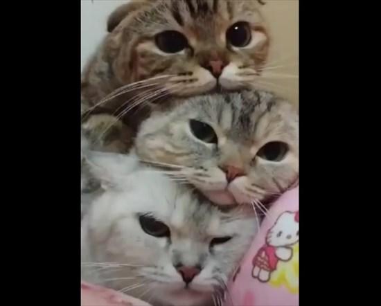 猫の上に猫!積み重なるネコたちの可愛すぎる画像1