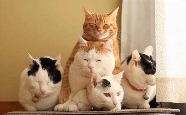 猫の上に猫!積み重なるネコたちの可愛すぎる画像12