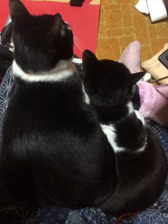 猫の上に猫!積み重なるネコたちの可愛すぎる画像10