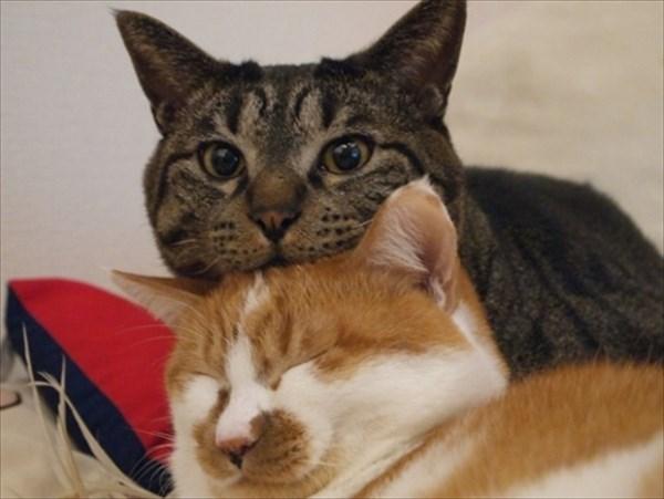 猫の上に猫!積み重なるネコたちの可愛すぎる画像2