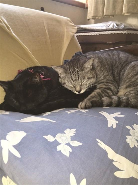 猫の上に猫!積み重なるネコたちの可愛すぎる画像7