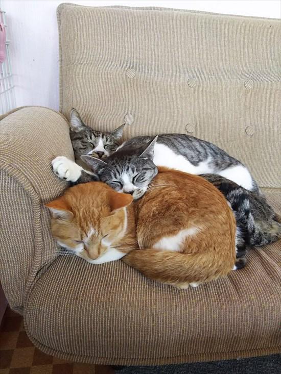 猫の上に猫!積み重なるネコたちの可愛すぎる画像8
