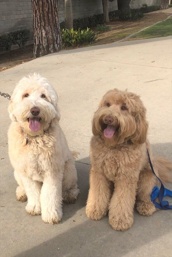 散歩中に偶然別々に暮らす兄弟と出会う犬 再会画像2
