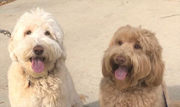 散歩中に偶然別々に暮らす兄弟と出会う犬 再会画像3