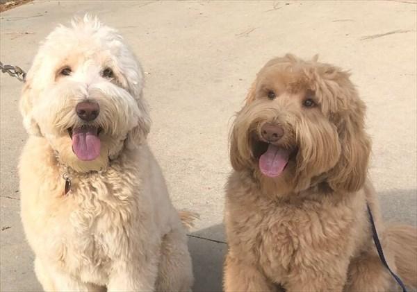 散歩中に偶然別々に暮らす兄弟と出会う犬 再会画像1
