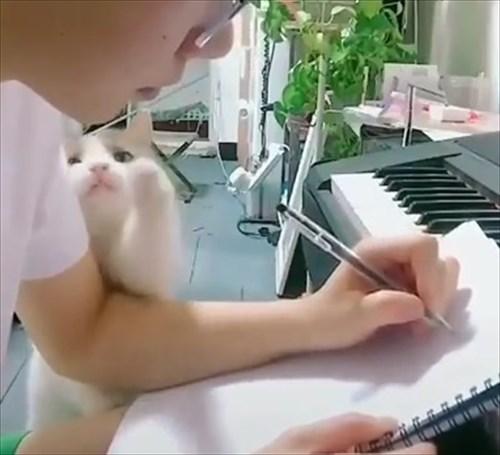 作業中の飼い主に甘い表情で誘惑する猫2