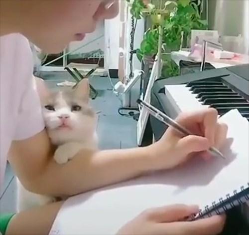 作業中の飼い主に甘い表情で誘惑する猫3