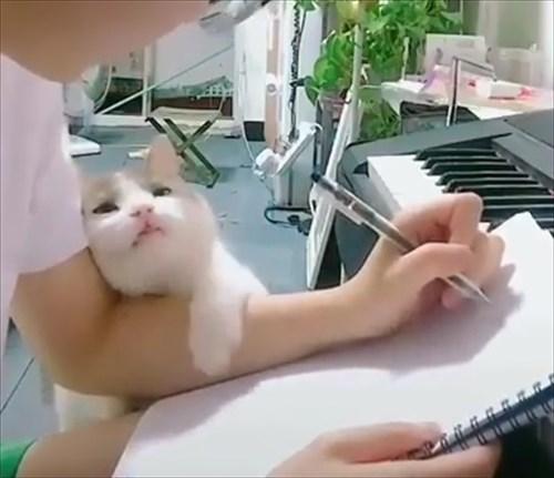 作業中の飼い主に甘い表情で誘惑する猫4