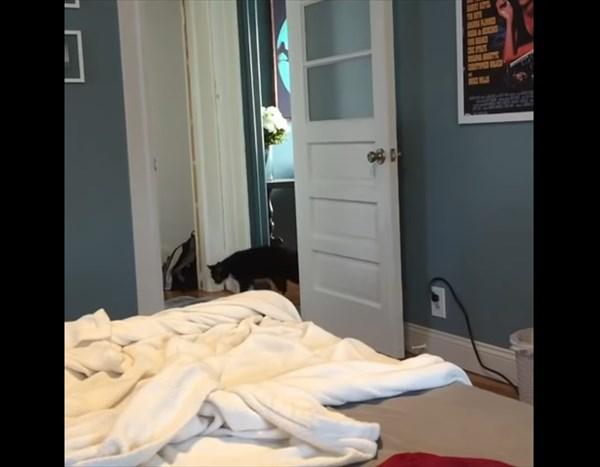 飼い主が一瞬で消えるマジックを猫にしてみた結果5