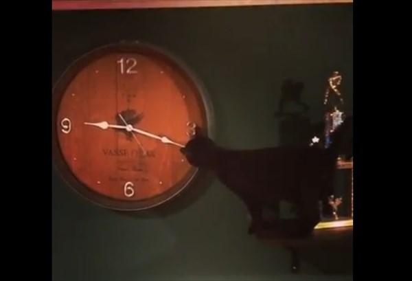 壁掛け時計で遊ぶ猫 1