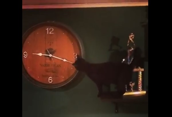 壁掛け時計で遊ぶ猫 2