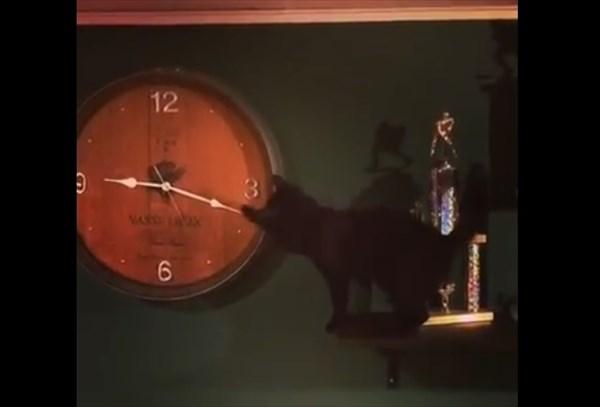 壁掛け時計で遊ぶ猫 3