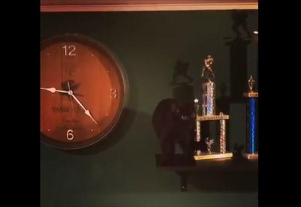 壁掛け時計で遊ぶ猫 5