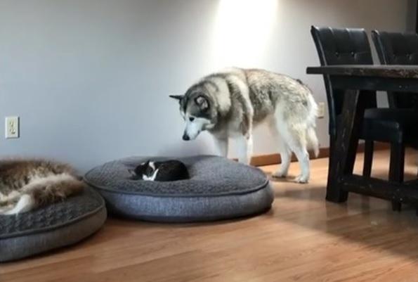 猫に寝所を取られた犬の優しい行動