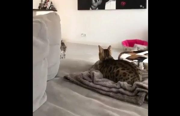 猫がもってきたおみやげ お金1