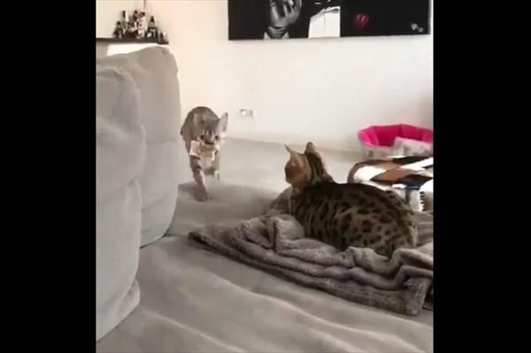 猫がもってきたおみやげ お金2