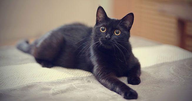 黒猫の魅力届け1