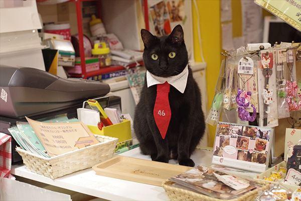 黒猫の魅力届け8