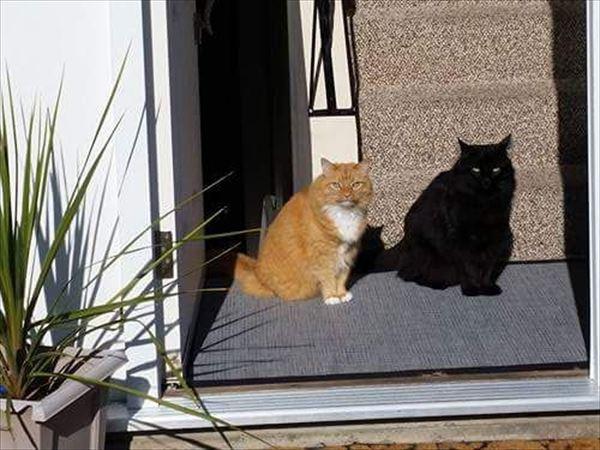 黒猫の魅力届け21