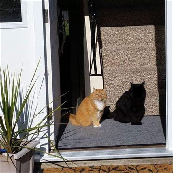 黒猫の魅力届け20