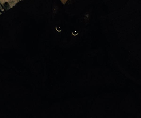 黒猫の魅力届け13