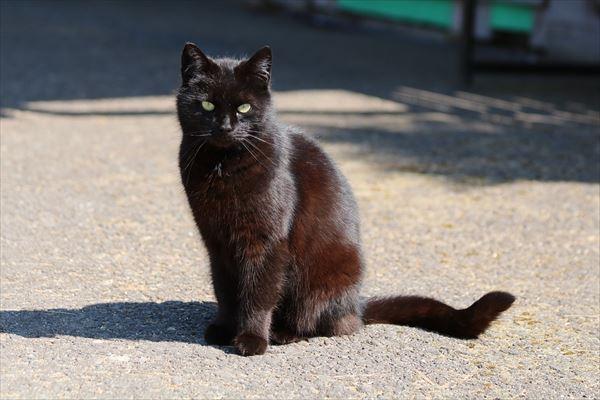 黒猫の魅力届け22