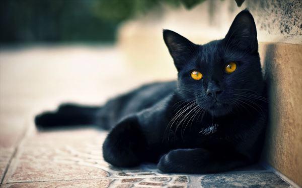 黒猫の魅力届け17