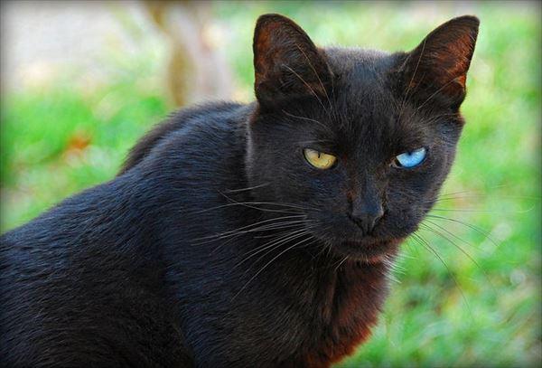 黒猫の魅力届け16