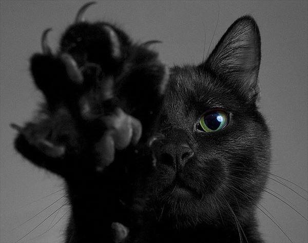 黒猫の魅力届け15