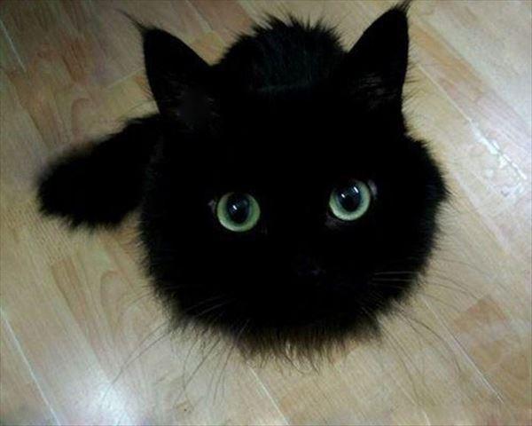 黒猫の魅力届け6