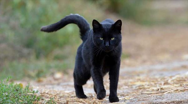 黒猫の魅力届け18